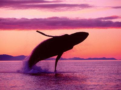 haiku_whale