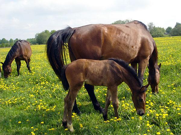 symbol_horse