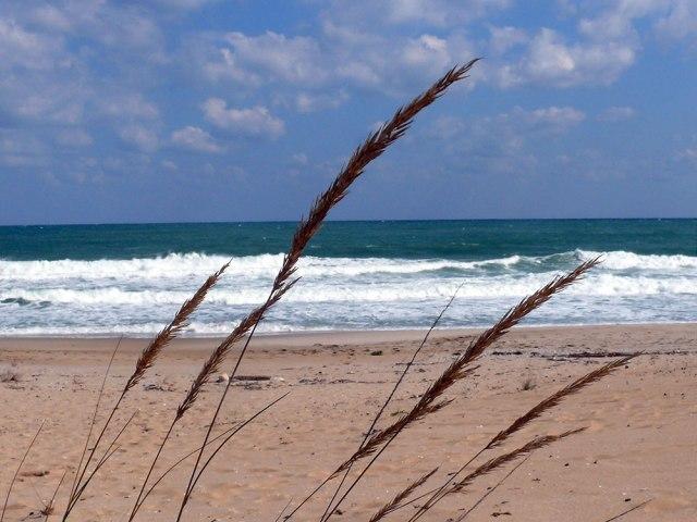 grass_sea